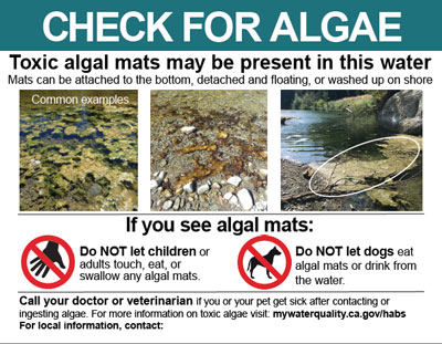 Check for Algae sign